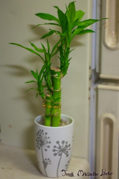plants-1